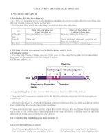Tài liệu ôn tập môn sinh học lớp 12 luyện thi đại học (21)