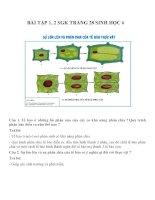 Bài tập SGK môn sinh học lớp 6 (24)