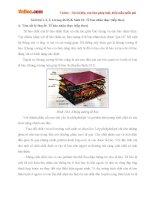 Giải bài tập trang 46 SGK Sinh học lớp 10: Tế bào nhân thực (tiếp theo)