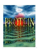 protein(sv)tài liệu chuyên ngành sinh học thưc phẩm