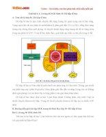 Giải bài tập trang 66 SGK Sinh học lớp 10: Hô hấp tế bào