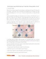 Giải bài tập trang 68 SGK Sinh lớp 9: Đột biến số lượng nhiễm sắc thể