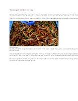 Thận trọng với món ăn từ côn trùng