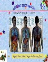 Bài giảng sinh học 8 vệ sinh hô hấp thao giảng (12)