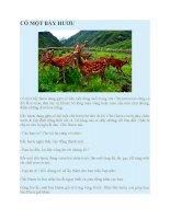 Truyện kể mầm non  có một bầy hươu