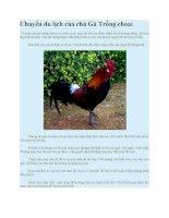 Truyện kể mầm non  chuyến du lịch của chú gà trống choai