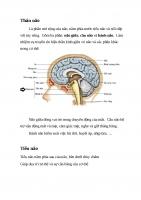 CĐ 2 giải phẫu não phần 2