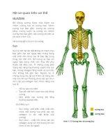 grays anatomy for students bản tiếng việt  chương 1    các hệ cơ quan trong cơ thể người