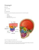 Grays anatomy for students bản tiếng việt  chương 8  giải phẫu đầu mặt cổ part 1/2