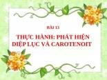 Bài 13. Thực hành: Phát hiện diệp lục và carôtenôit