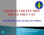 Tập huấn chuyên môn về thuốc bảo vệ thực vật (BVTV)