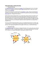 Kháng thể đơn dòng và kháng thể đa dòng
