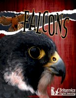 Raptours falcons