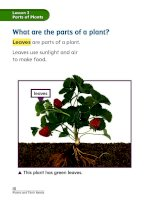 chapter 1 plants and their needs lesson 3 parts of plants 161130020723