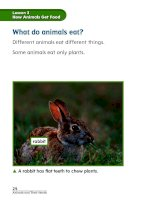 chapter 2 animals and their needs lesson 3 how animals get food 161130021041