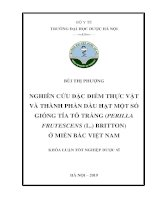 Nghiên cứu đặc điểm thực vật và thành phần dầu hạt một số giống tía tô trắng (Perilla Frutescens(L.) Britton) ở miền Bắc Việt Nam