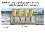 Ứng dụng công nghệ BIOFOC nuôi thâm canh cá rôphi
