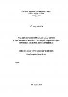 Bước đầu nghiên cứu phân loại chi bần (sonneratia l  f  1781) ở việt nam