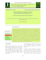 Effect of spacing and topping on yield of summer sesame (Sesamum indicum L.)