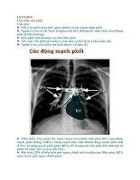 XQ2 cấu trúc rốn phổi